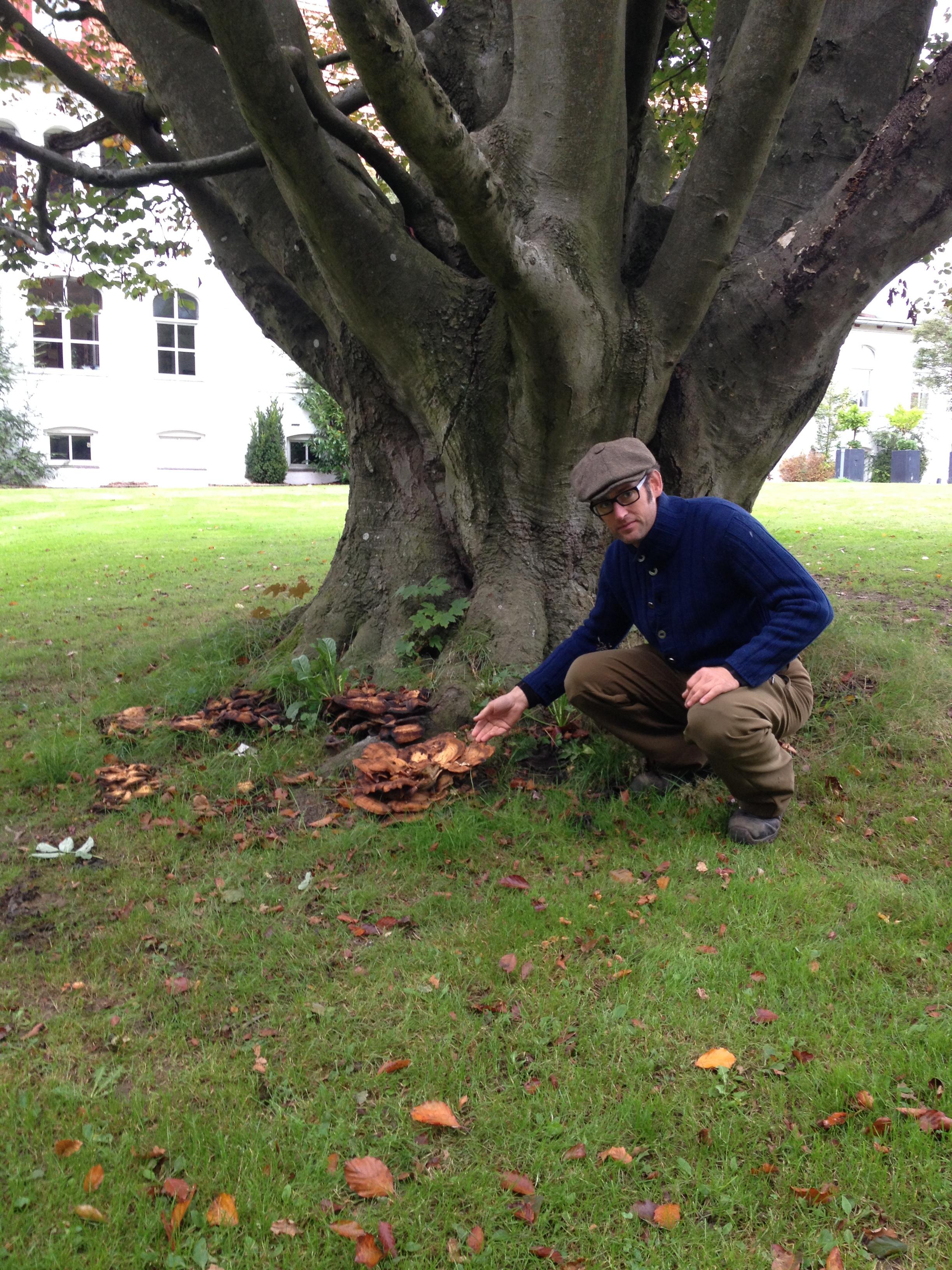 Kæmpeporesvamp Vurdering af risikotræer